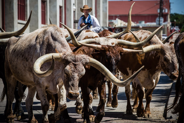 Fort Worth Texas Stockyards Rodney Smith Photography